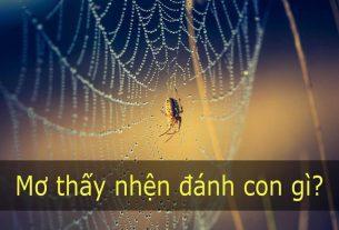 Mộng thấy nhện đánh đề con gì?