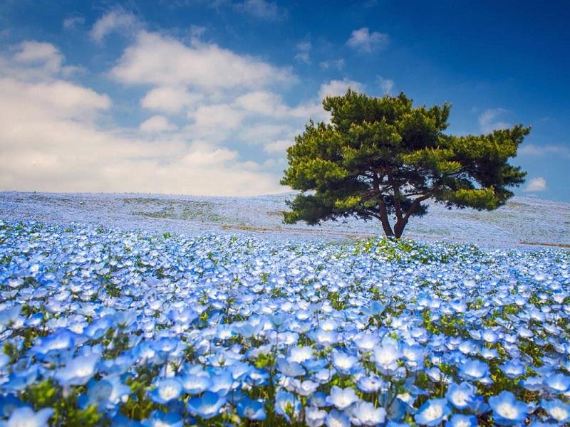 Nằm mơ thấy hoa đánh đề con gì? Hoa là số mấy?