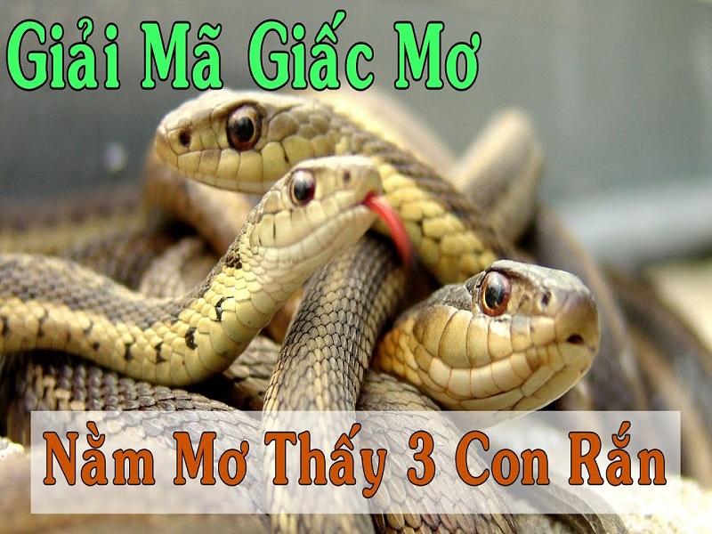 Nằm mơ thấy 3 con rắn đánh đề con gì? 3 con rắn là số mấy?