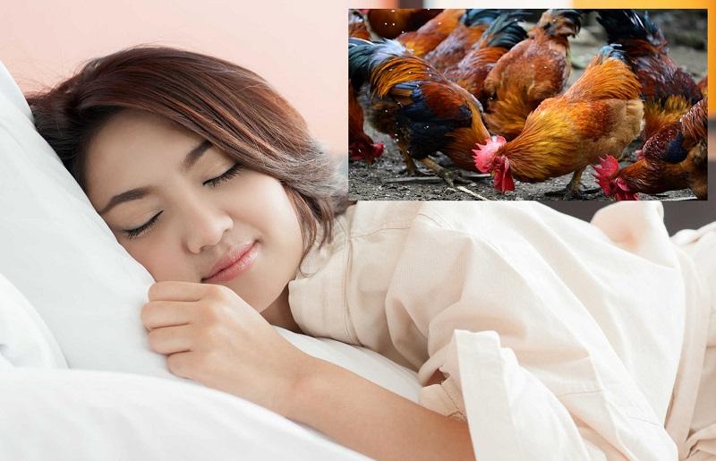 Nằm mơ thấy gà đánh lô đề con gì? Gà là số mấy?