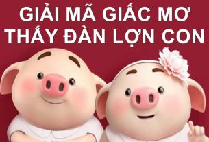 Giải mã giấc mơ thấy đàn lợn con