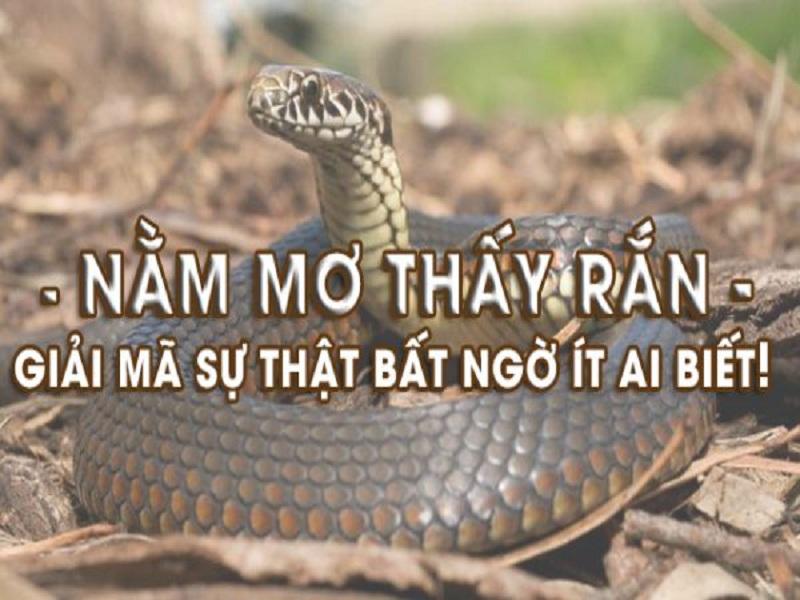 Nằm mơ thấy chặt đầu rắn nên đánh con gì?